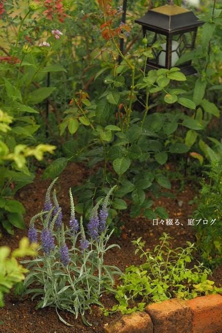 f:id:m-garden-life:20170613165916j:plain