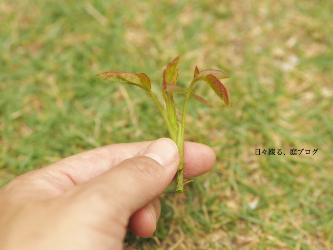 f:id:m-garden-life:20170613170152j:plain