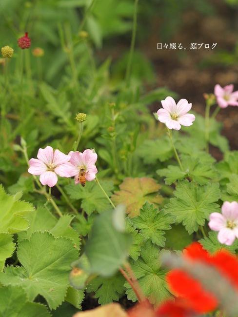 f:id:m-garden-life:20170613170454j:plain