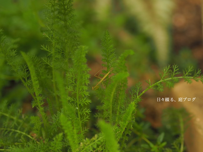 f:id:m-garden-life:20170613170853j:plain