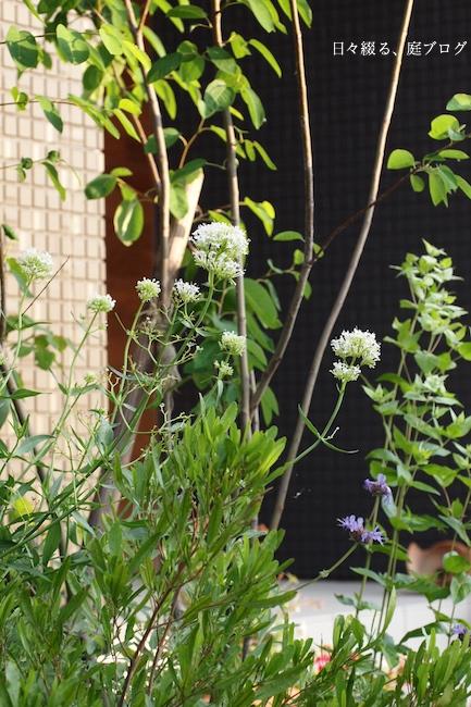 f:id:m-garden-life:20170614120132j:plain