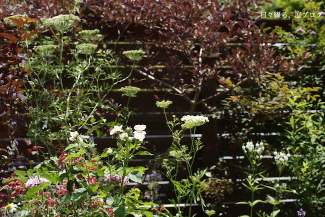 f:id:m-garden-life:20170614121405j:plain