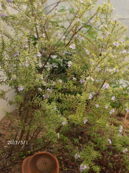 f:id:m-garden-life:20170617103143j:plain