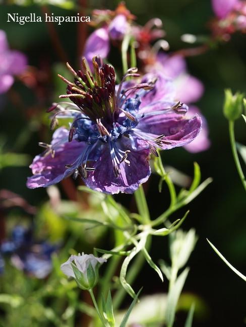 f:id:m-garden-life:20170618125648j:plain