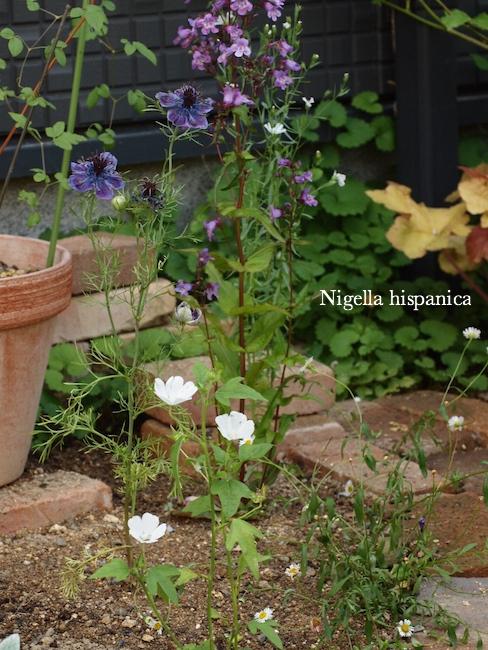 f:id:m-garden-life:20170618130017j:plain