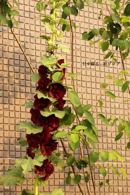 f:id:m-garden-life:20170618135647j:plain