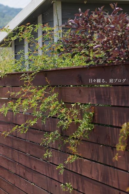 f:id:m-garden-life:20170618140258j:plain