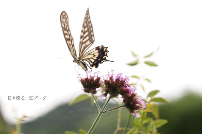 f:id:m-garden-life:20170621130359j:plain
