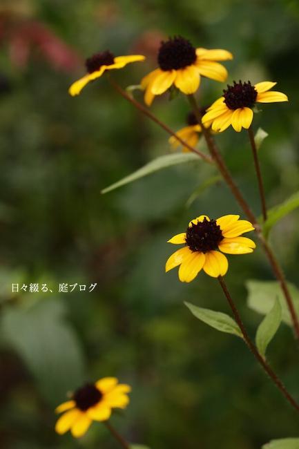 f:id:m-garden-life:20170621130645j:plain