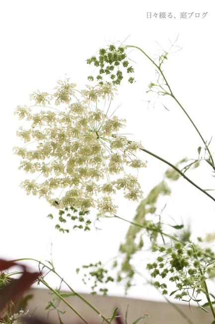 f:id:m-garden-life:20170621130731j:plain