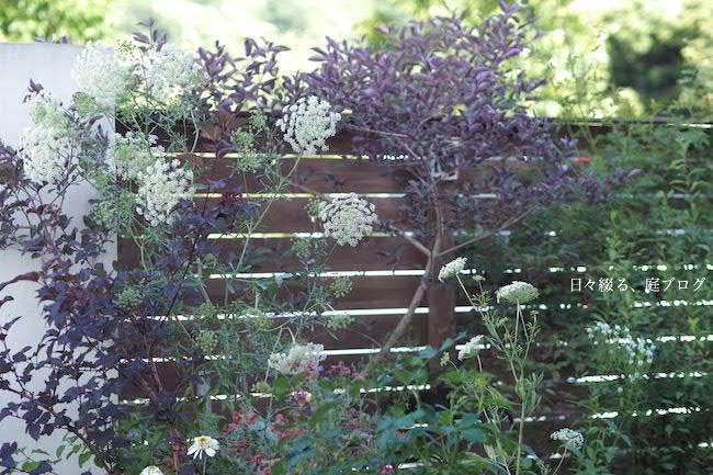 f:id:m-garden-life:20170621164826j:plain