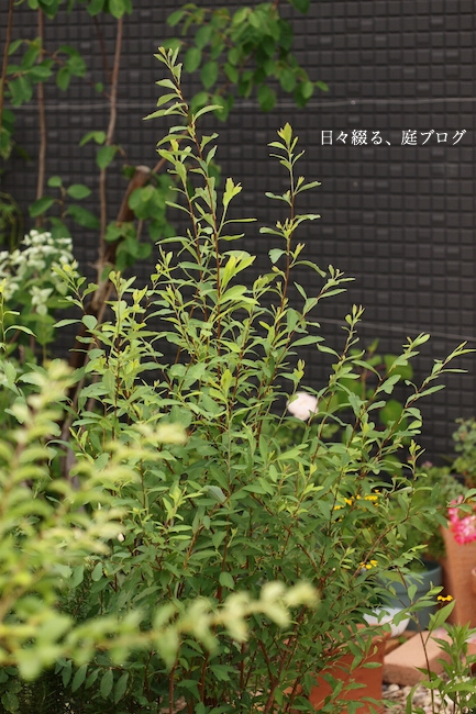 f:id:m-garden-life:20170623162207j:plain