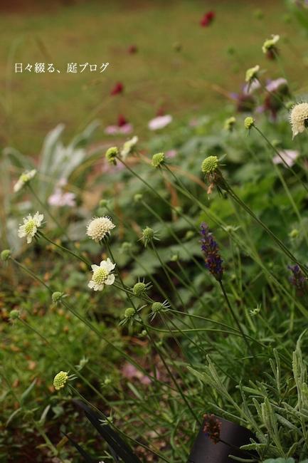 f:id:m-garden-life:20170626084459j:plain
