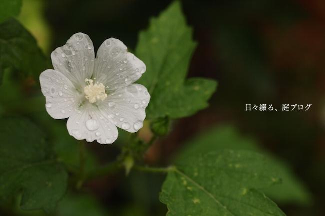 f:id:m-garden-life:20170627145000j:plain