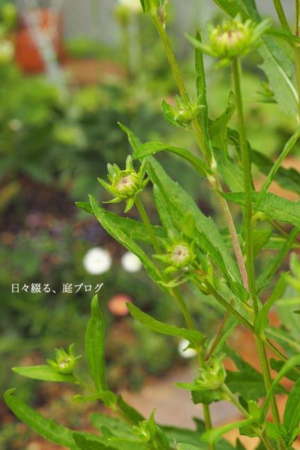 f:id:m-garden-life:20170627150421j:plain