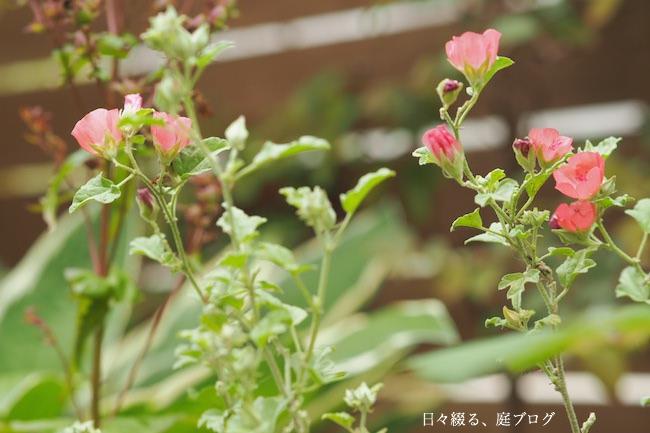 f:id:m-garden-life:20170627152145j:plain