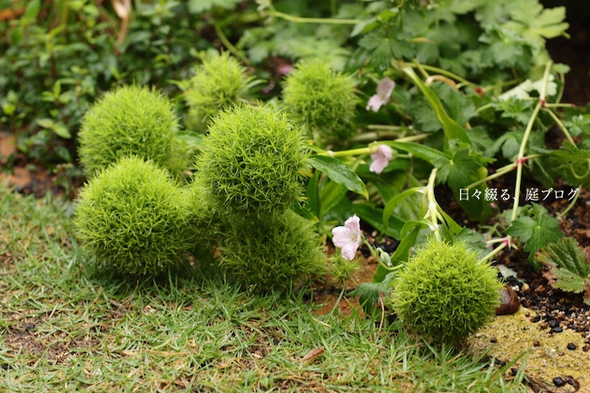 f:id:m-garden-life:20170628093954j:plain