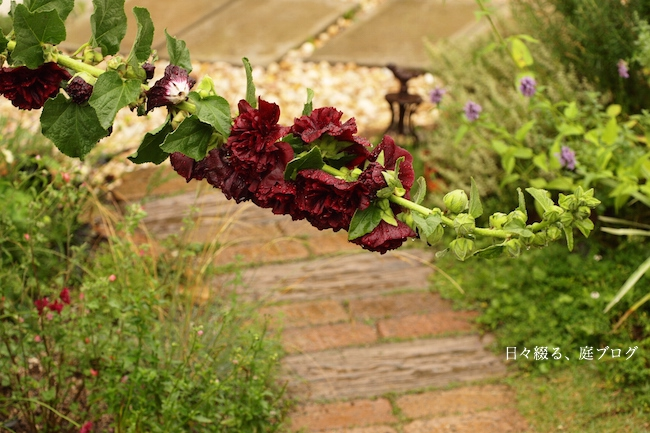 f:id:m-garden-life:20170628094415j:plain