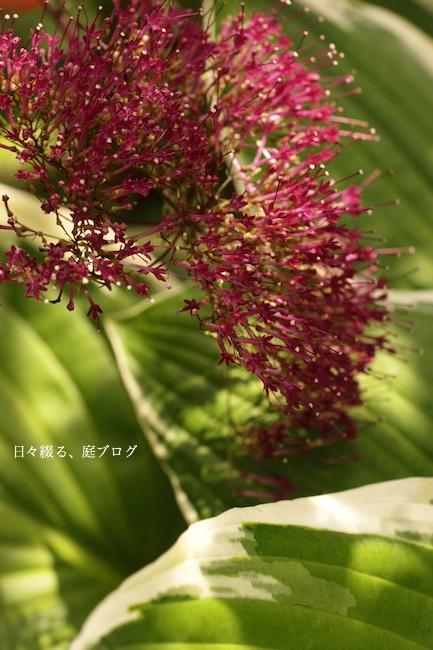 f:id:m-garden-life:20170630081504j:plain