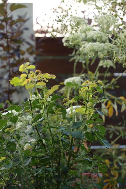 f:id:m-garden-life:20170703084646j:plain