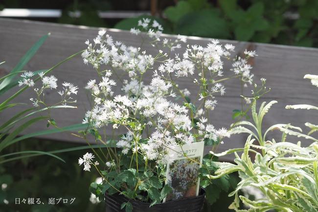 f:id:m-garden-life:20170703124100j:plain