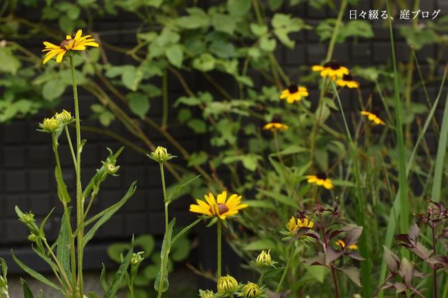 f:id:m-garden-life:20170703133313j:plain