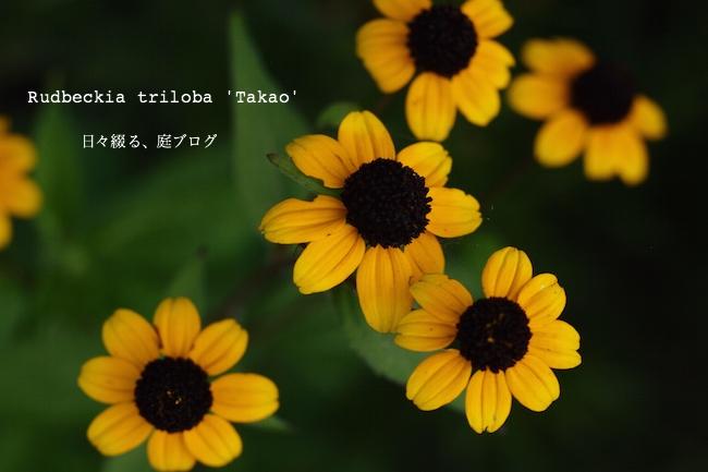 f:id:m-garden-life:20170703171049j:plain