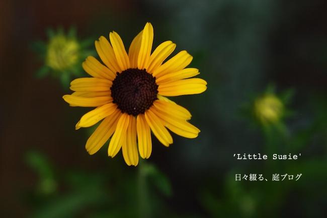 f:id:m-garden-life:20170703171726j:plain