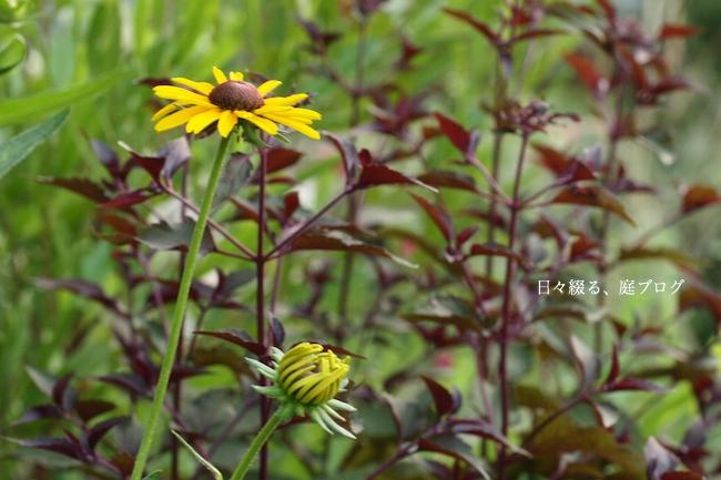 f:id:m-garden-life:20170703172605j:plain