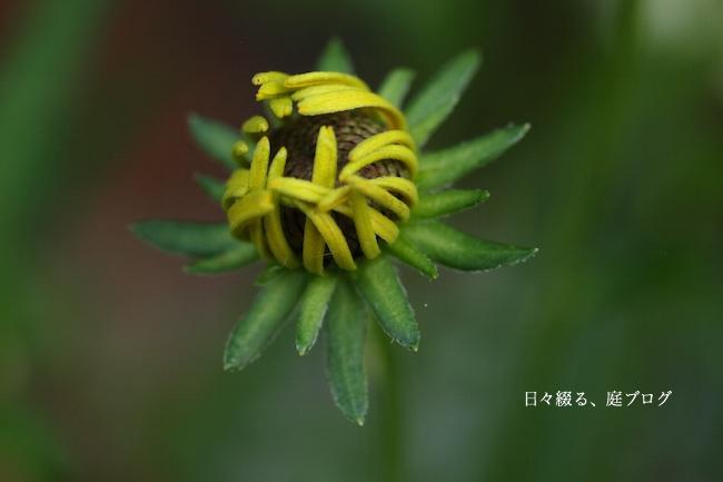 f:id:m-garden-life:20170703172836j:plain