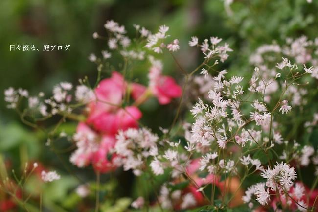 f:id:m-garden-life:20170706081520j:plain