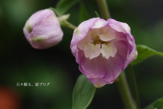 f:id:m-garden-life:20170708110938j:plain