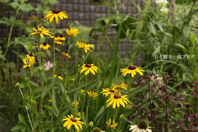 f:id:m-garden-life:20170708112359j:plain