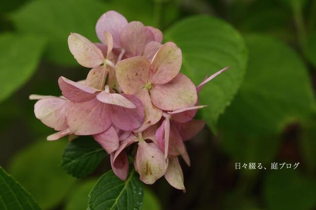 f:id:m-garden-life:20170708131401j:plain