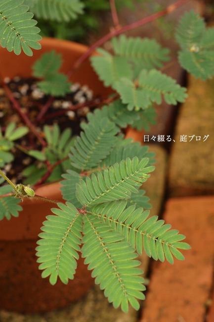f:id:m-garden-life:20170708131555j:plain