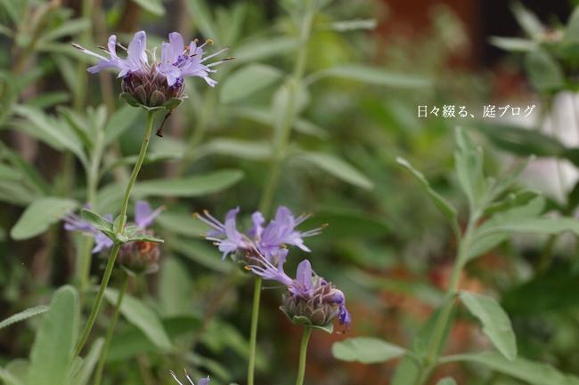 f:id:m-garden-life:20170712173259j:plain