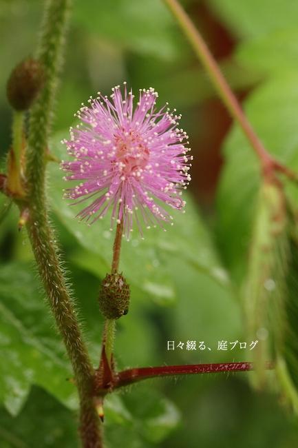 f:id:m-garden-life:20170712173406j:plain