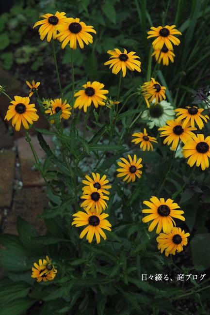 f:id:m-garden-life:20170714080739j:plain