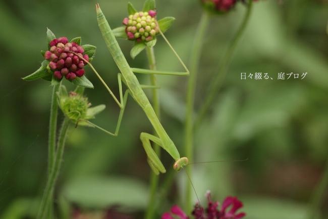 f:id:m-garden-life:20170714172108j:plain