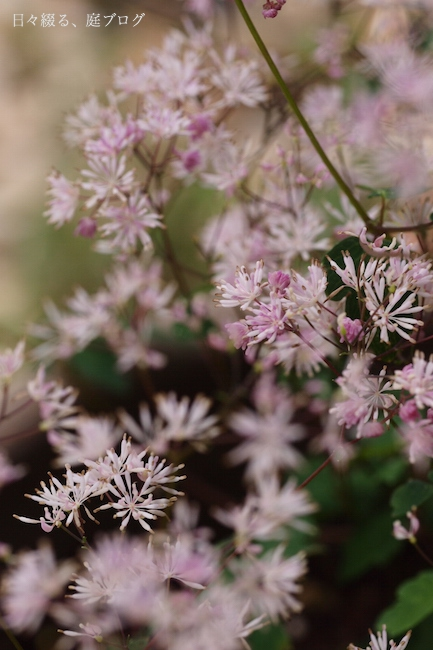 f:id:m-garden-life:20170714173436j:plain