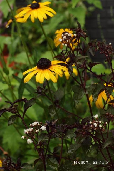 f:id:m-garden-life:20170719153631j:plain