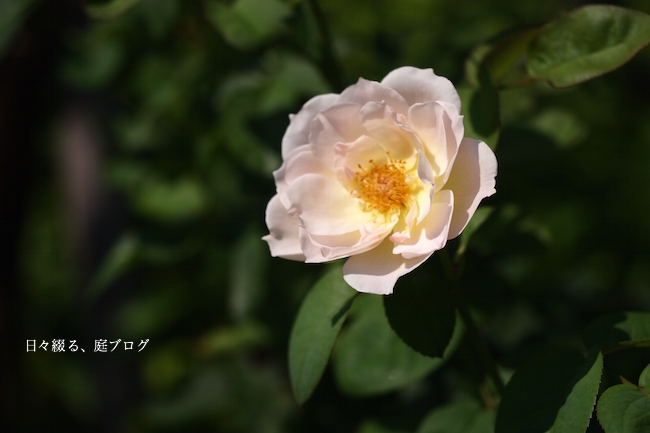 f:id:m-garden-life:20170720094651j:plain