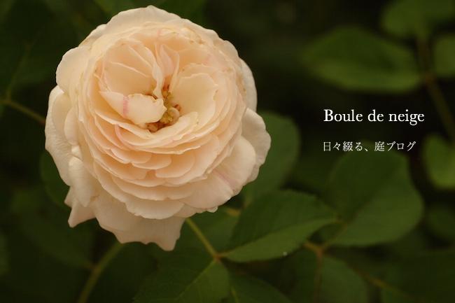 f:id:m-garden-life:20170721150856j:plain