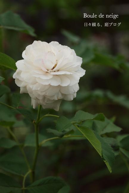 f:id:m-garden-life:20170722134142j:plain