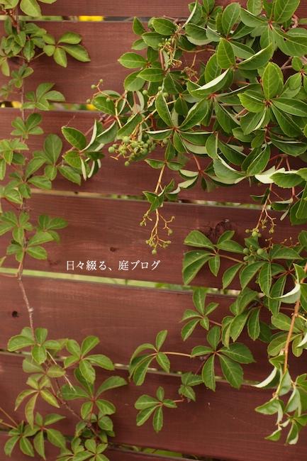 f:id:m-garden-life:20170723185219j:plain