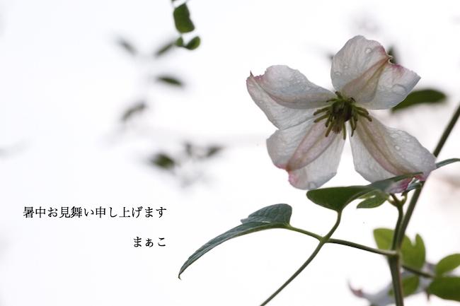 f:id:m-garden-life:20170725133456j:plain