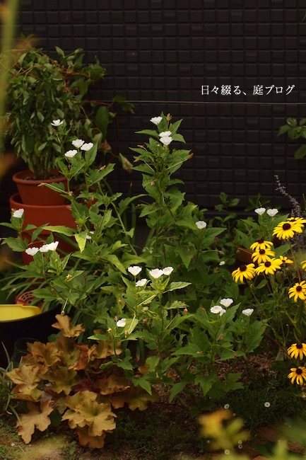 f:id:m-garden-life:20170725142350j:plain