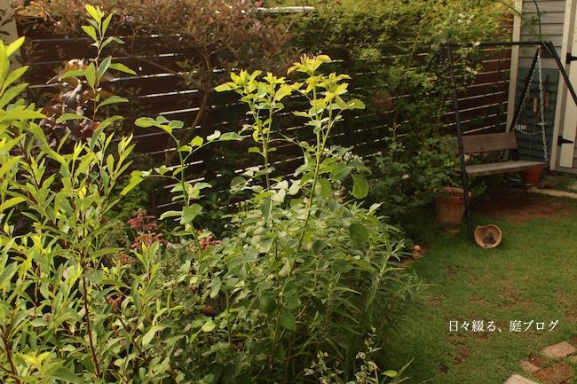 f:id:m-garden-life:20170729092726j:plain