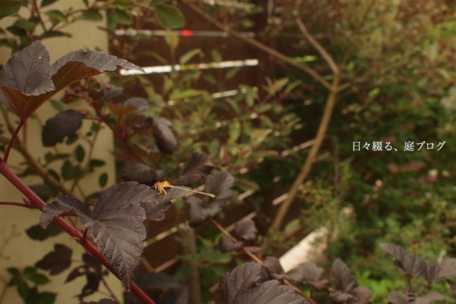 f:id:m-garden-life:20170729095200j:plain