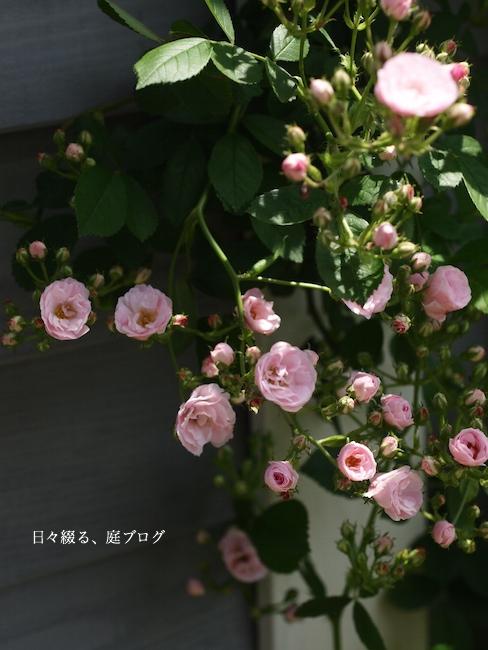 f:id:m-garden-life:20170803124127j:plain